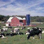 FDA Shuts Down Farm for… Selling Fresh Milk