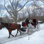 With Assault on Horse-Drawn Carriages, Mayor de Blasio Follows Rights-Violating Bloomberg