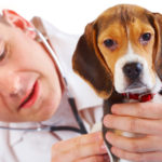 The Virtue of Treating People Like Animals: Why Human Health Care Should Mirror Veterinary Health Care