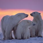 TOS-Con 2022—in the Arctic Circle?